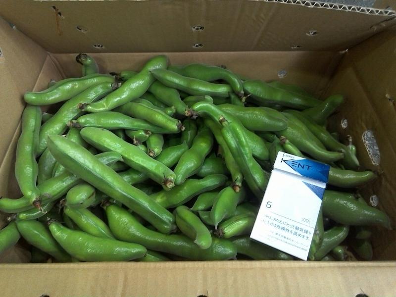 鹿児島県産のそら豆