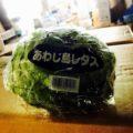 「千葉県産のほうれん草」と「淡路島産レタス」|今週土曜日の特売情報