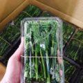 千葉県産の菜の花が1パック(100g)で140円|今週土曜日の特売情報