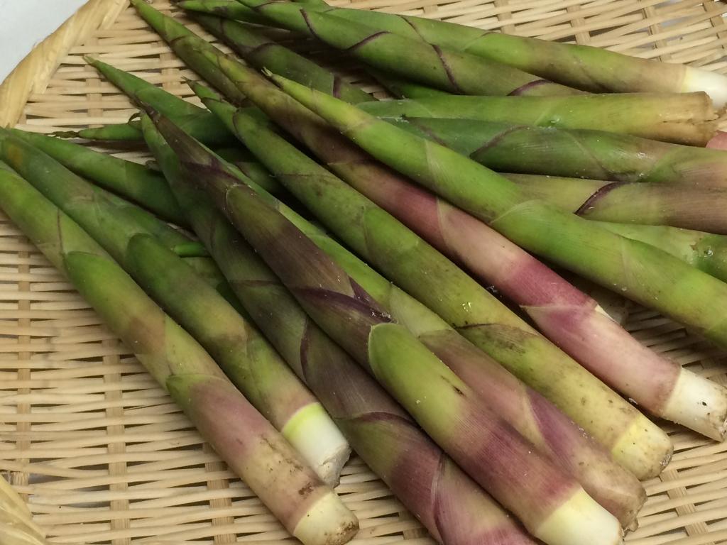 旬野菜「姫竹」