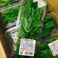 鮮度抜群の愛知県産のバジルと長野県産ズッキーニ 今週の特売情報