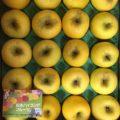 長野県産のシナノゴールド(オリジナル品種のリンゴ)|今週の特売情報