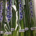 佐賀県産の小ねぎ・茨城県産のチンゲン菜 今週の業務用野菜【特売情報】