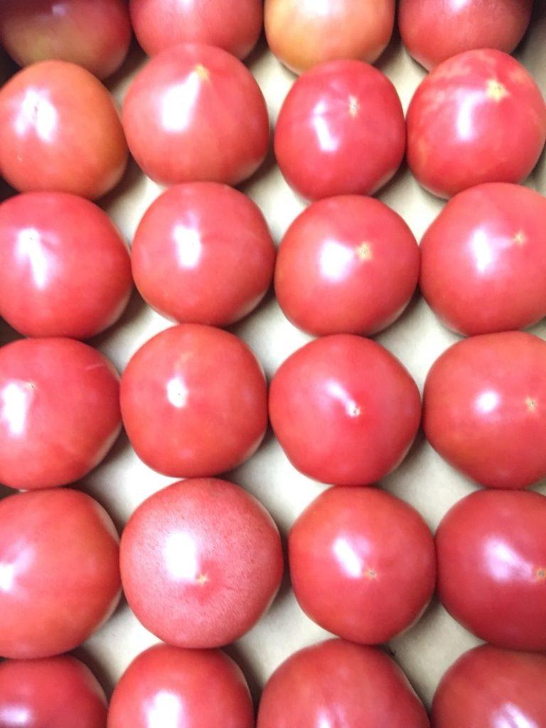 神奈川県産のトマト