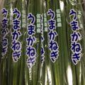 佐賀県産の小ネギ・高知県産のミョウガ|今週土曜日の業務用野菜 特売情報