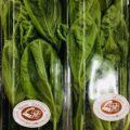 【特売情報】静岡県産のバジル|今週土曜日のお得な業務用野菜