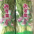 【特売情報】茨城県産の水菜|今週土曜日のお得な業務用野菜