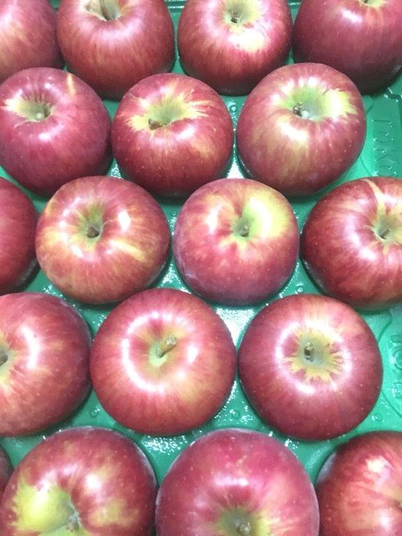 青森県産のつがるりんご