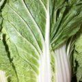 【特売情報】茨城県産の白菜|今週土曜日のお得な業務用野菜