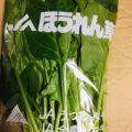 【特売情報】栃木県産のホウレンソウと茨城県産のキャベツ(大玉)|今週土曜日のお得な業務用野菜