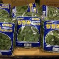 12月のおすすめ業務用旬野菜「ちぢみほうれん草」
