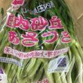 1月のおすすめ業務用旬野菜「あさつき」