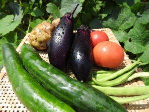 キュウリとその他の野菜