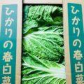 【特売情報】茨城県産の春白菜|今週土曜日のお得な業務用野菜