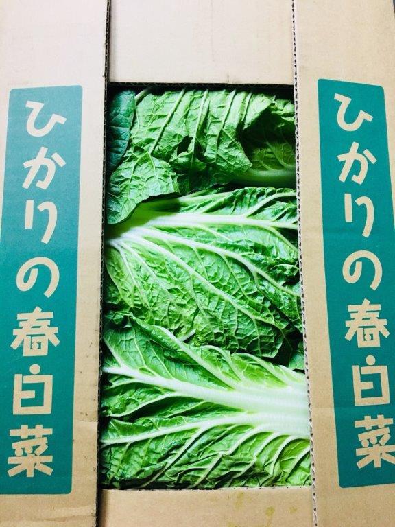 茨城県産の春白菜