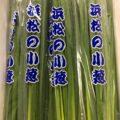 【特売情報】静岡県産の小ネギ|今週土曜日のお得な業務用野菜