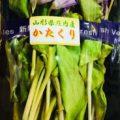 4月のおすすめ旬野菜「かたくり」