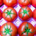 【特売情報】茨城県産などのトマト|今週土曜日のお得な業務用野菜