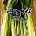 【特売情報】茨城県産の小松菜|今週土曜日のお得な業務用野菜