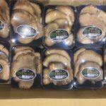【特売情報】長野県産の黒アワビ茸・山形県産のたもぎ茸|今週土曜日のお得な業務用野菜
