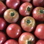 【特売情報】潰し用トマト|今週土曜日のお得な業務用野菜