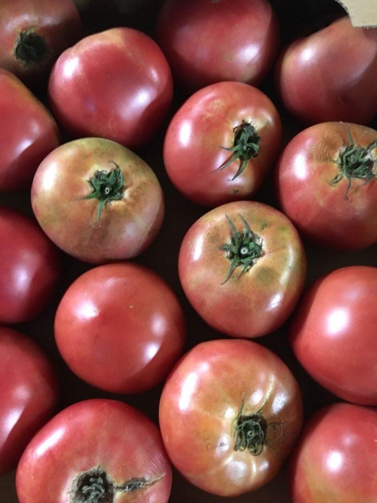 潰し用トマト