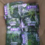 12月のおすすめの業務用旬野菜「寒じめほうれん草」